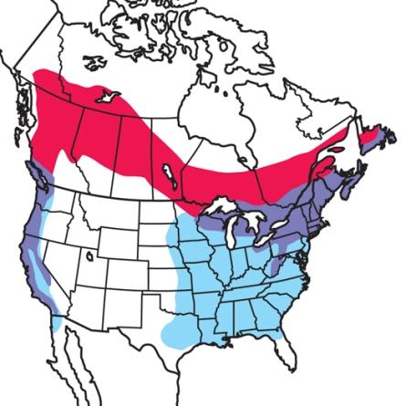 PurpleFinch-RangeMap.AudubonFieldGuide