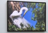 Great Egret preening - from Sea Pines Rehab Hospital Wall - by Lee
