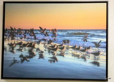 Seabirds at Shore in Brevard County. Take from wall of Sea Pine Rehab Hospital by Lee