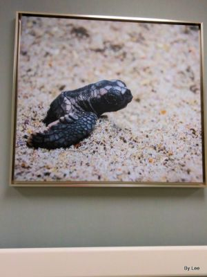 Baby Turtle Emerging from the Sand for the 1st time - At Sea Pines Rehab Hospital by Lee