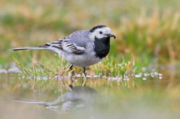 Palaces Are Known For Both Tattletales AndWagtails