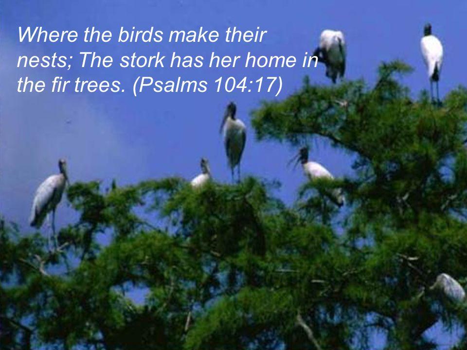 Psalm104.17-SlidePlayer.com-storks