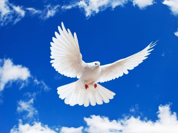White-Dove-flying.background-clouds