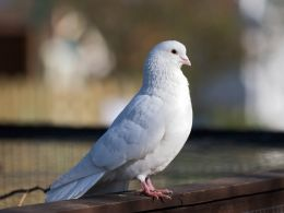 "Reflecting on Floodwaters (and a Dove): How Do We ""Return""?"