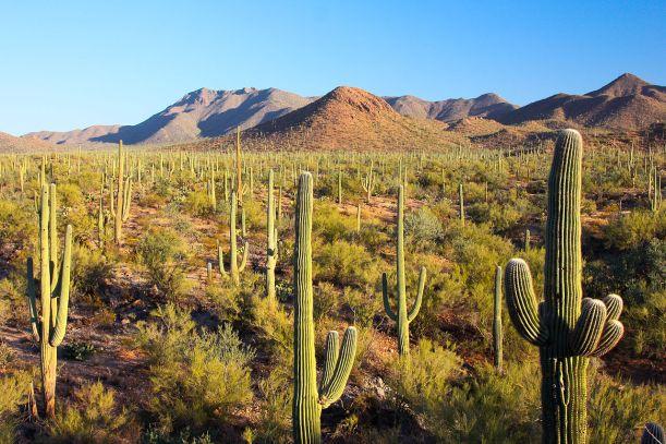SaguaroNP-Arizona.JoeParks