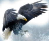 Bald Eagle landing ©CC0 Pixabay