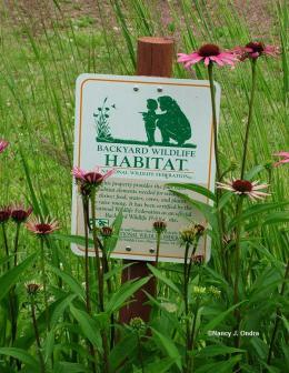 Backyard Birdwatching,  Enhanced by Mini-Habitat Planning,  with an Application of Romans13:7