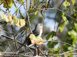 Joys and Challenges ofBirdwatching