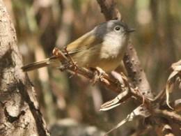 Avian And Attributes –David's