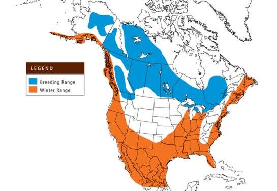 Bufflehead-range.SeaDuckJV.org-map