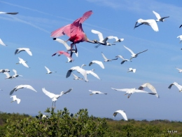 Creation Moment's – Let Birds Fly Across TheExpanse