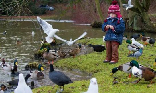 Child-feeding-ducks.DailyExpress