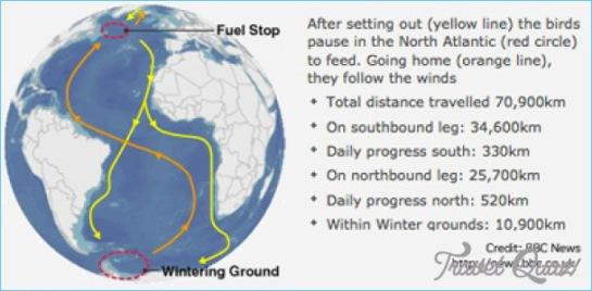 Arctic Tern Migration Map_10.jpg