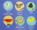 Brevard Zoo Butterflies