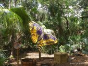 Butterfly Sign at Brevard Zoo