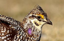 Avian And Attributes – Sharp PartII