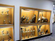 BJU Bird Collection 2018
