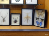 BJU BUg Collection 2018