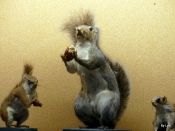 BJU Squirrel Collection 2018