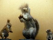BJU Squirrel Collection 2018