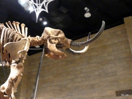 Mastodon at CreationMuseum