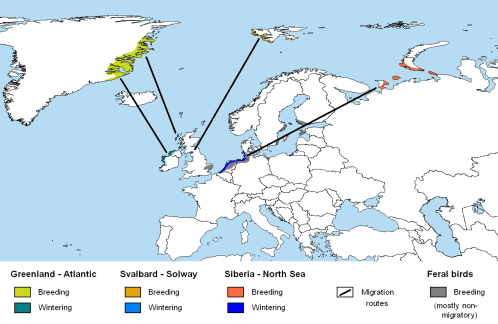 BarnacleGoose-rangemap.WikipediaCommons