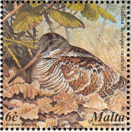 eurasianwoodcock-malta-postage