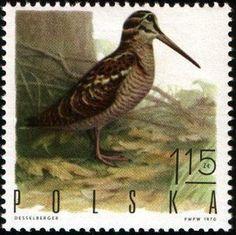 eurasianwoodcock-poland-postage