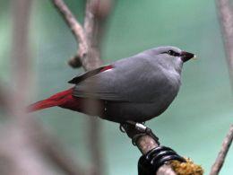 Heaven's New Jerusalem and Birds –Chalcedony