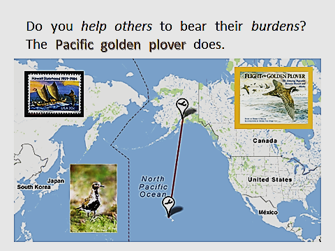 Pacific-Golden-Plover.PPT-migration-map