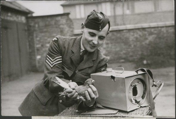 WWII-Pigeon-Service-RAF-FeatheryPhotographyBlog