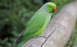 Birdman of Chennai India –BBC
