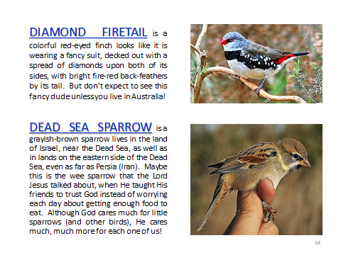 BAW-DiamondFiretail-DeadSeaSparrow