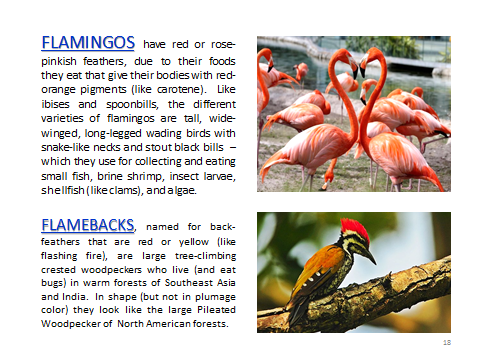BAW-Flamingo-Flameback
