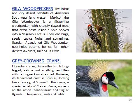 BAW-GilaWoodpecker-Grey-CrownedCrane
