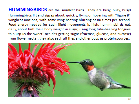 BAW-Hummingbirds