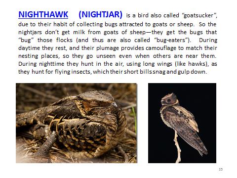 BAW-Nighthawk