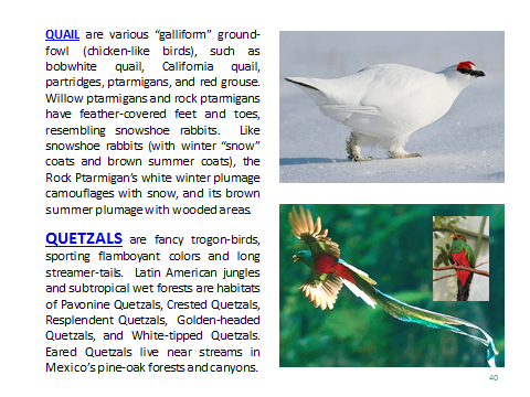 BAW-Quail-Quetzal