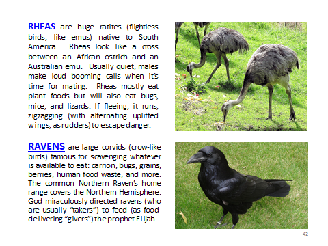 BAW-Rhea-Raven