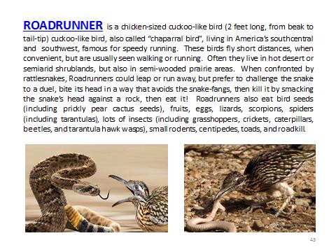 BAW-Roadrunner