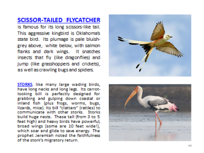 BAW-Scissortail-Stork