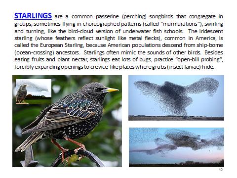 BAW-Starling