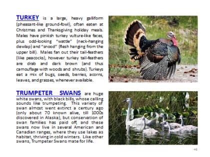BAW-Turkey-TrumpeterSwan