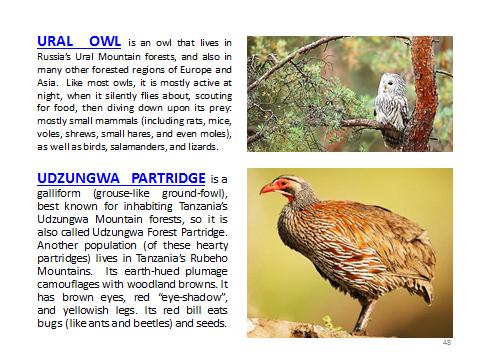 BAW-UralOwl-UdzungwaPartridge