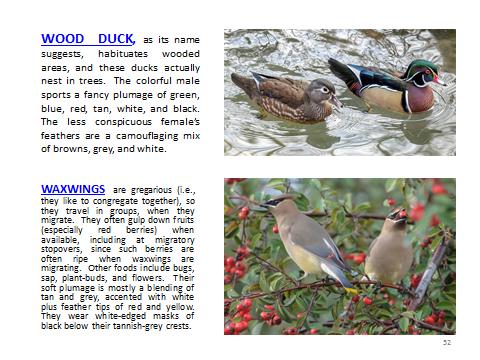 BAW-WoodDuck-Waxwings