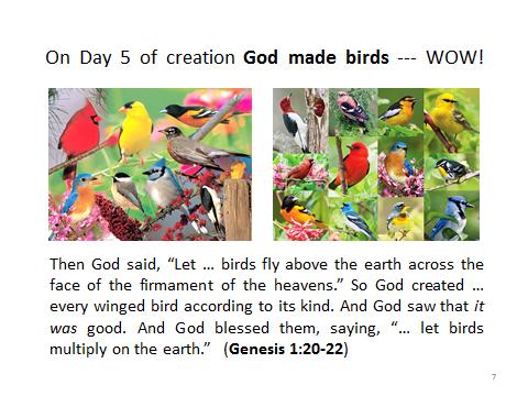 birds-Genesis1.20-22