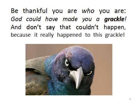 birds-grackle.could-have-been-you