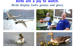 We Watch Birds,  Yet We Too Are BeingWatched!