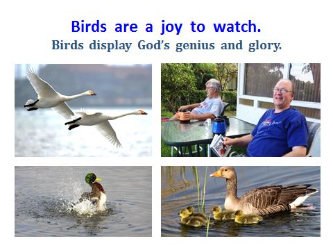 BAW-birds-are-fun-to-watch