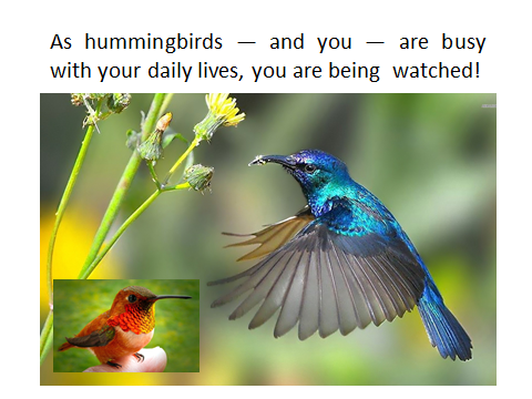 BAW-hummingbirds-are-watched